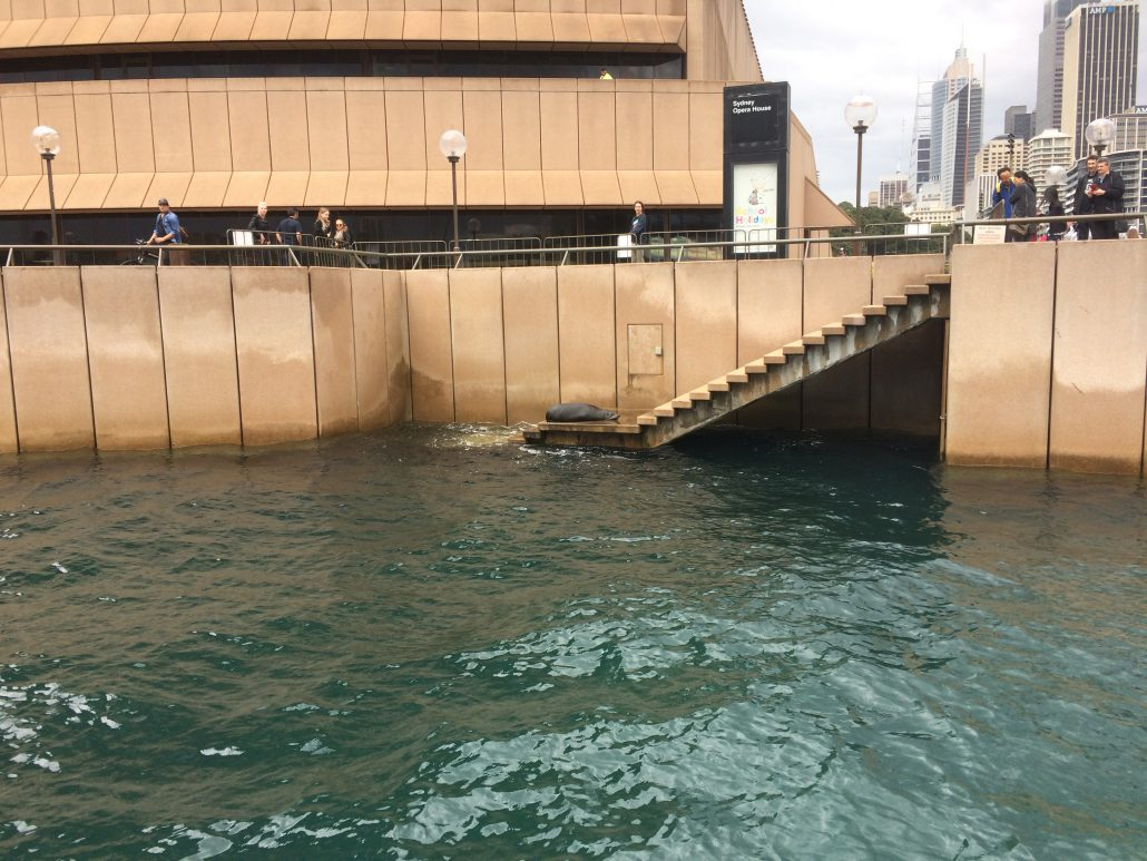 Cruise past the Opera House seal on Rockfish